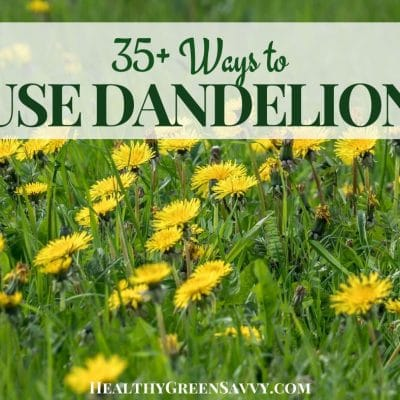 cover photo of dandelions growing in field with title text overlay