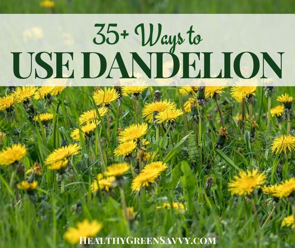35+ Ways to Eat Dandelions (& Why You'd Want To)