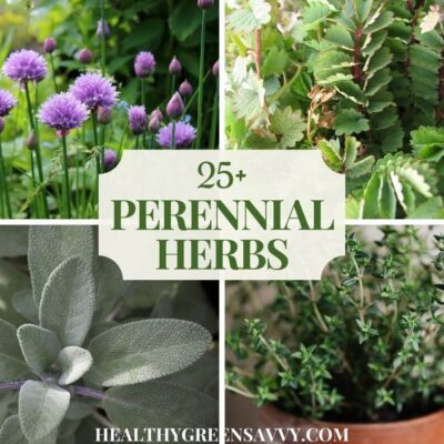 cover photo with collage of perennial herbs: chives, salad burnet, sage, and thyme plus title text