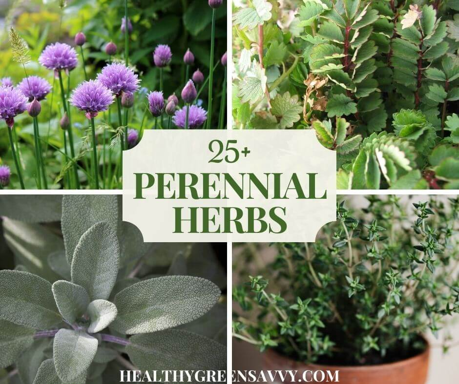 25+ Perennial Herbs to Grow in Your Garden