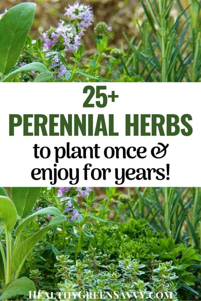 pin with photos of perennial herbs and title text