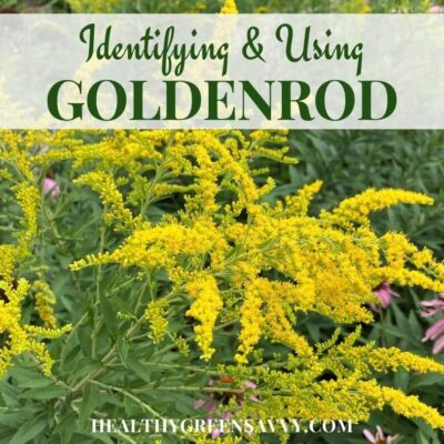 cover photo of goldenrod growing with title text overlay