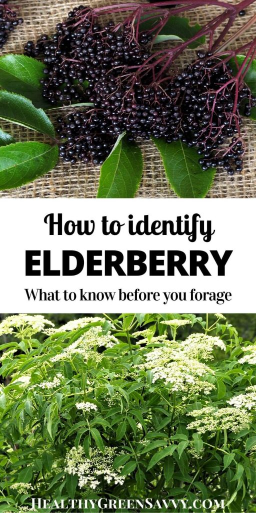 pin with photos of elderberries and elderflowers and title text