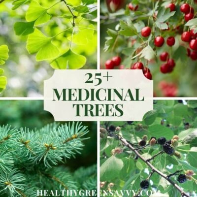 cover collage with photos of four medicinal trees, gingko, hawthorn, spruce, and mulberry