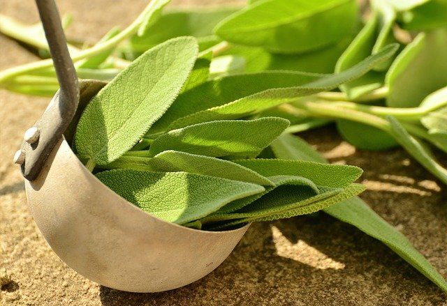 photo of sage leaves, an effective home remedy for cough