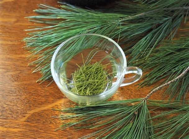 photo of pine needle tea steeping in cup