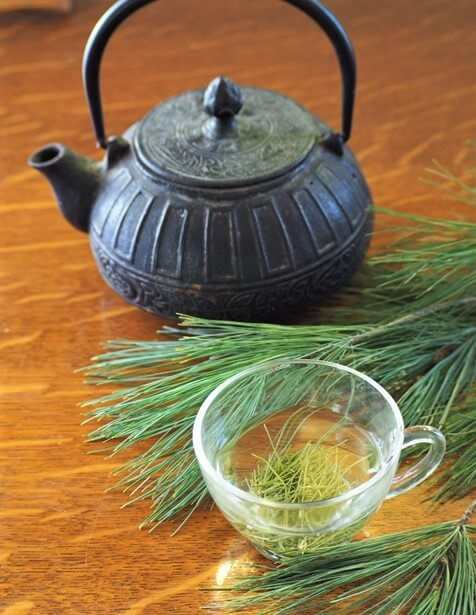 photo of pine needle tea brewing in cup