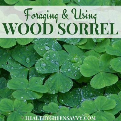 cover photo of sour grass wood sorrel leaves with title text overlay