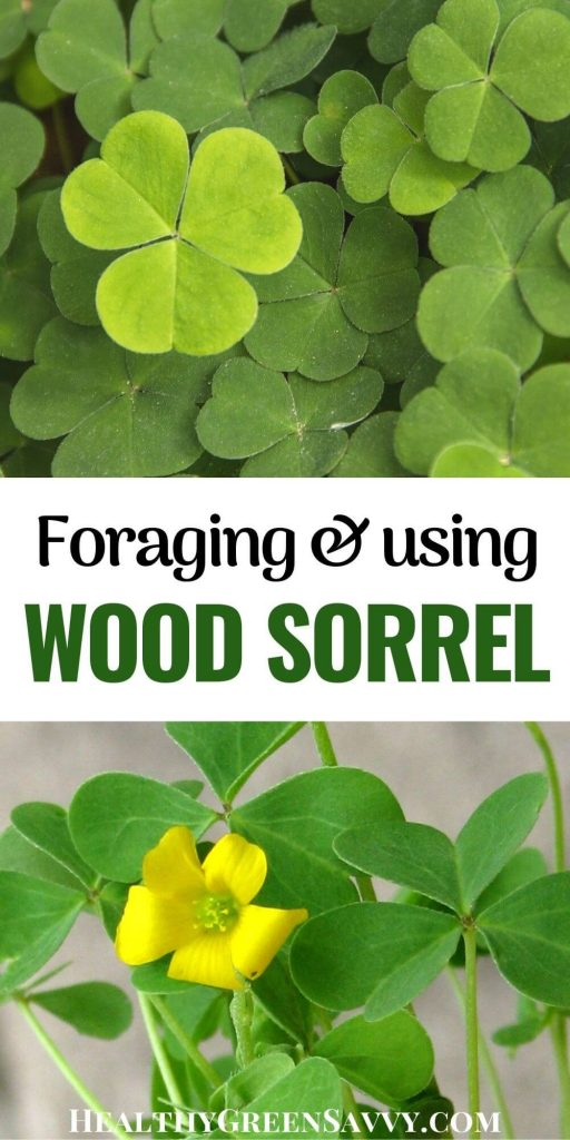 pin with photos of sour grass wood sorrel leaves and flowers plus title text