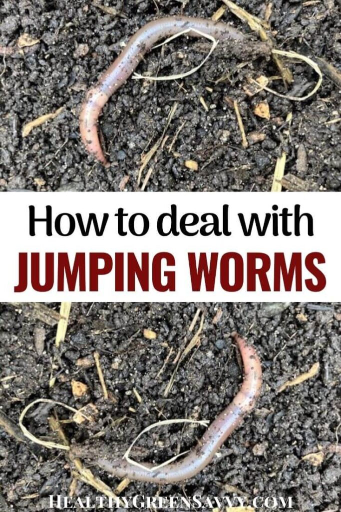 pin with photos of Asian jumping worm on soil and title text