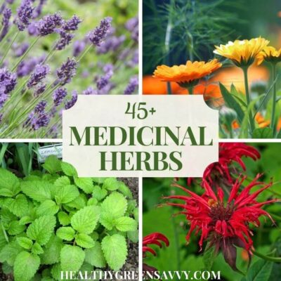 cover photo of some of the many herbs to consider when starting a medicinal herb garden: lavender, calendula, lemon balm, bee balm