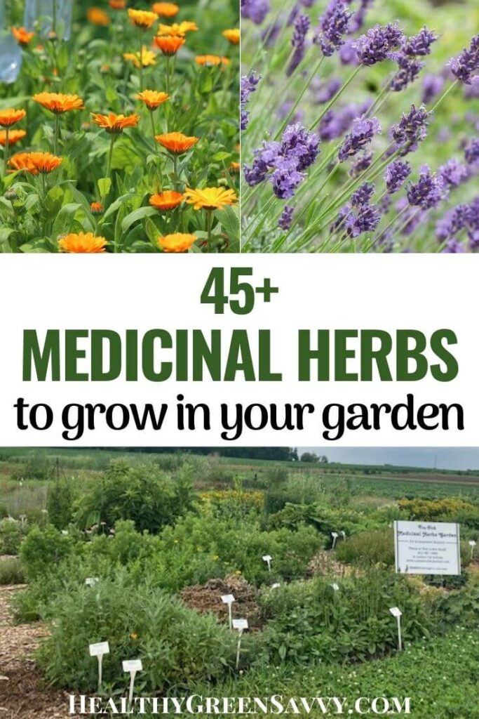pin with photos of some of the many herbs to consider when starting a medicinal herb garden including lavender, calendula and many more