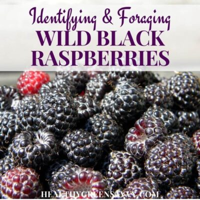 cover photo of black caps berries (wild black raspberries) with title text overlay