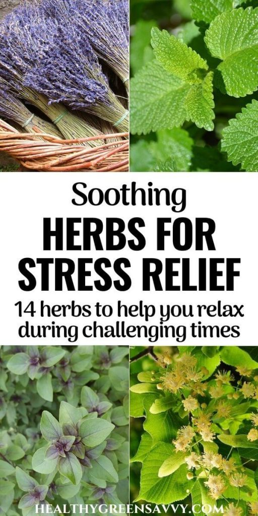pin with photos of calming herbs for stress: lavender, lemon balm, tulsi, and linden