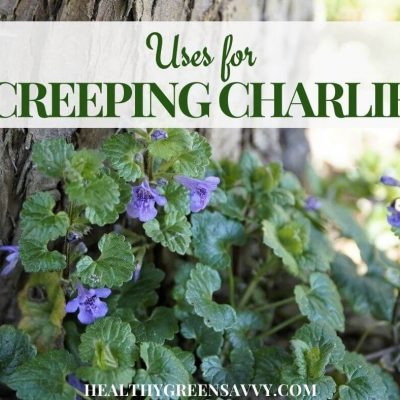 cover photo of creeping Charlie (ground ivy) growing with title text overlay
